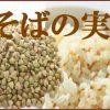 新たなスーパーフード「そばの実」脂肪の吸収を抑える希少なたんぱく質が含まれています。